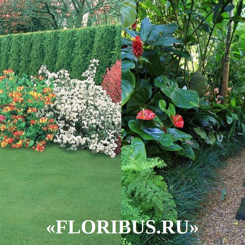 бордюрные растения на фото