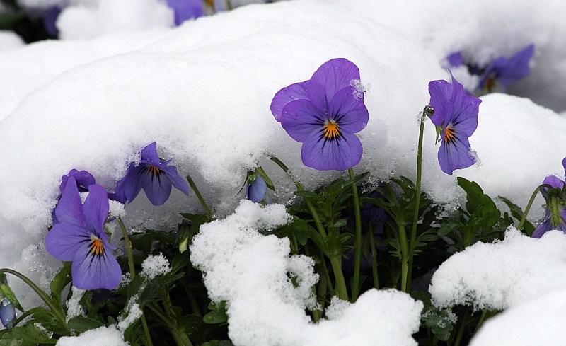 цветущие зимой комнатные цветы на фото