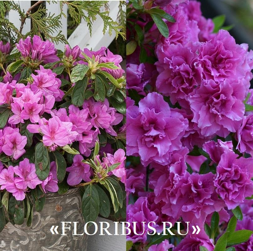 zimoy5 Комнатных растений, которые цветут даже зимой