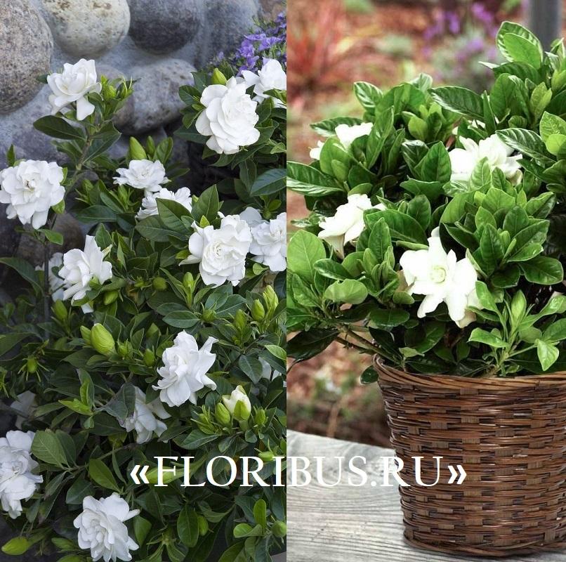 zimoy6 Комнатных растений, которые цветут даже зимой