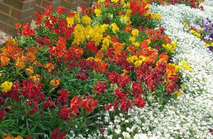 Красивые неприхотливые однолетники цветущие все лето с фото и названием